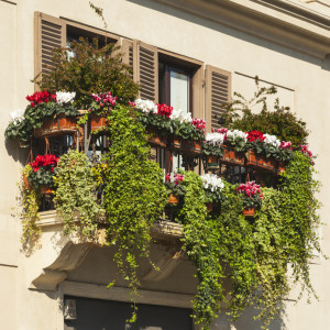 Balkonverkleidung mit Blumen