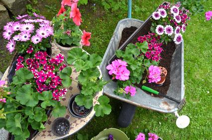 Blumen in Schubkarre