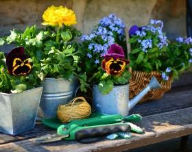 Alles neu macht der Mai – auch im Garten