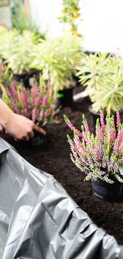 Die Pflanzen werden nach belieben angeordnet.