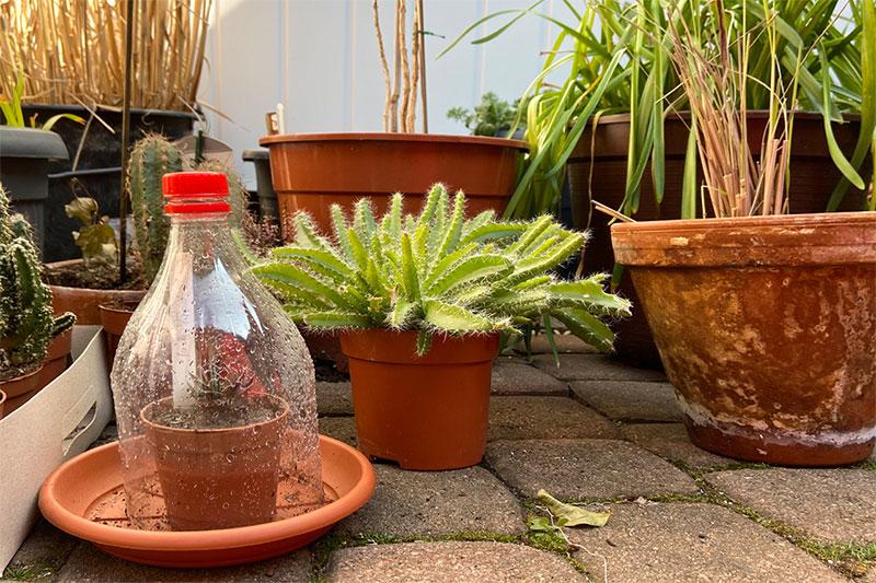 Mini Gewächshaus für junge Pflanzen