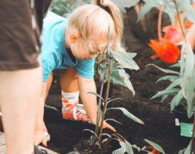 37 (+1) kinderleichte Gartenhacks mit Schritt-für-Schritt-Anleitung