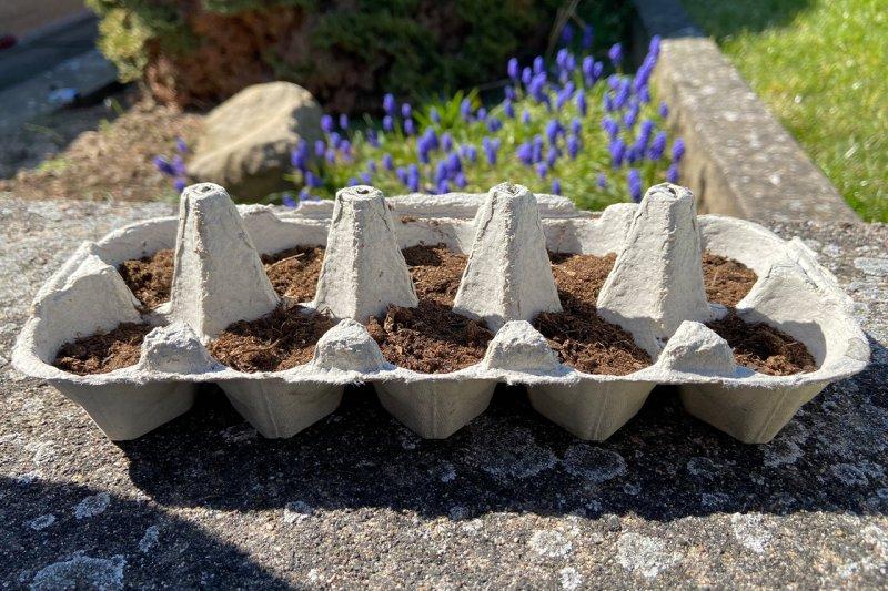 Eierkarton für Pflanzen