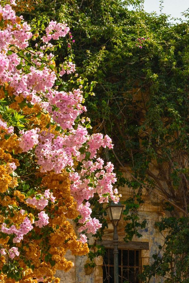 Ein dezent romantischer Garten