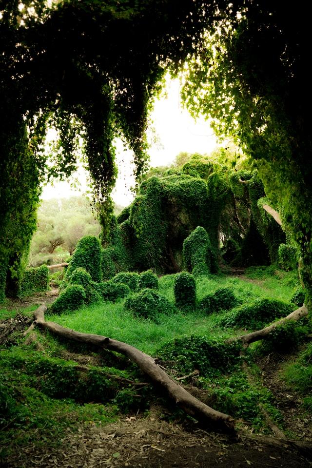So können Sie einen naturnahen kleinen romantischen Garten auch gestalten.