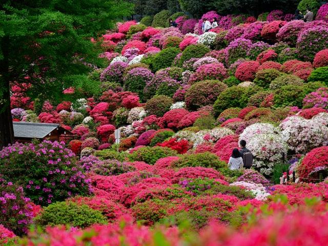 So kann ein romantischer Garten aussehen