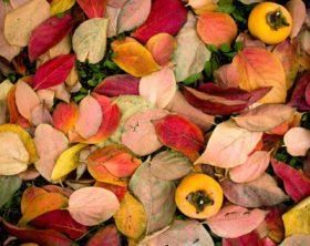 Herbst pflanzen
