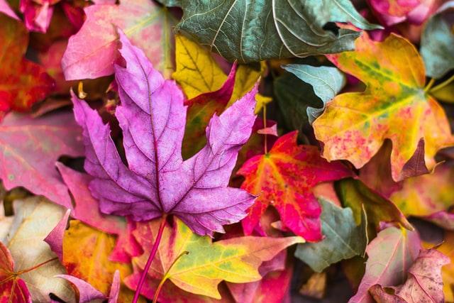 Herbst Pflanzen und ihre Farben